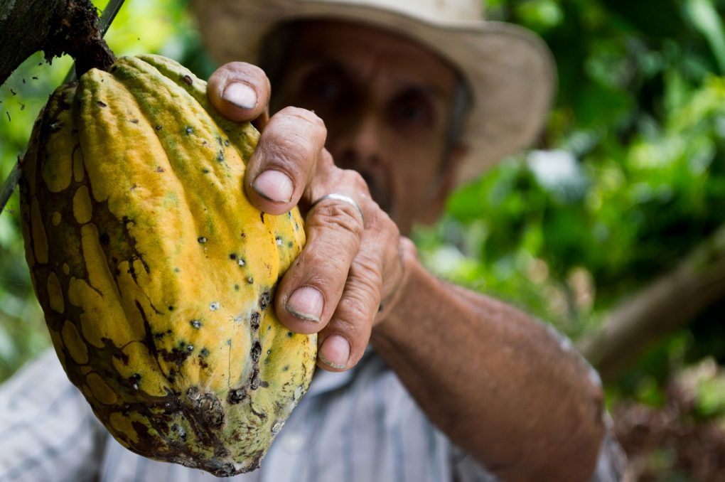 man-hand-fruit-cocoa development effectiveness