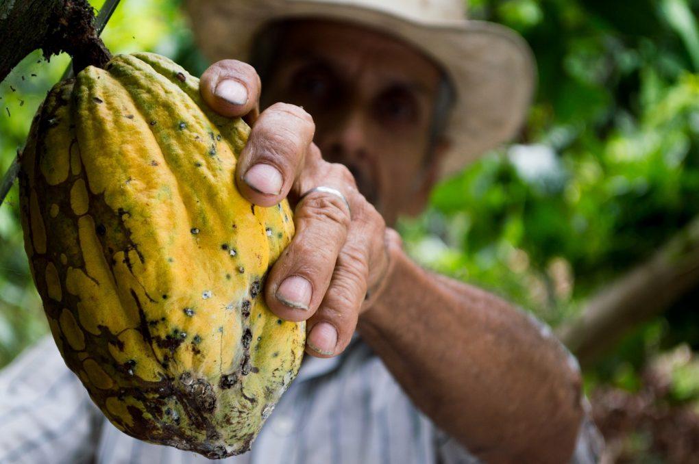 man-hand-fruit-cocoa development effectiveness